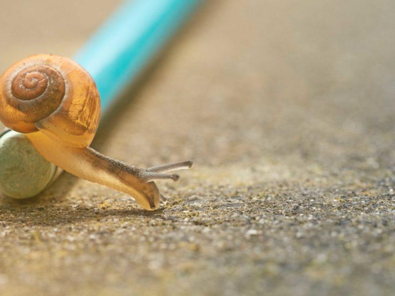 Pourquoi Ne Pas Opter Pour Une Slow Communication?